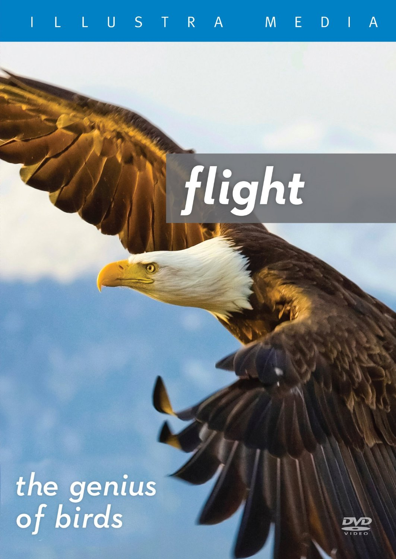 Flight—the genius of birds D-FGB