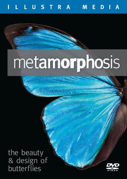 Metamorphosis—the beauty and design of butterflies D-MET