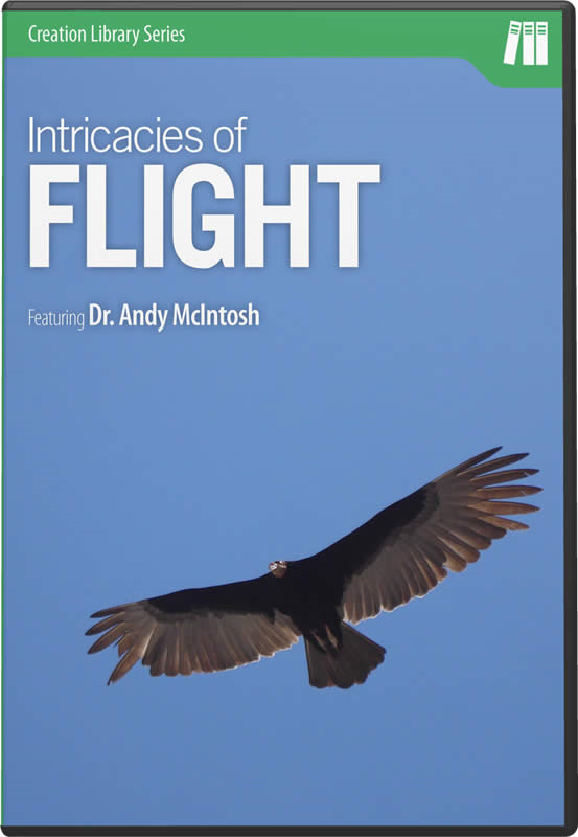 The Intricacies of Flight D-IF